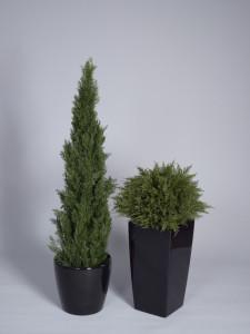 Konstgjord Cypress
