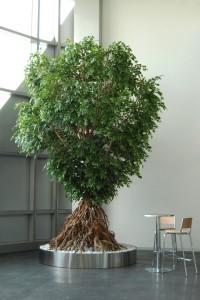 Konstgjorda växter med äkta torkade stammar.