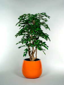 Konstgjord växt med äkta stam