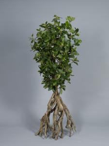 Mangroveträd konstgjort med äkta, torkade stammar
