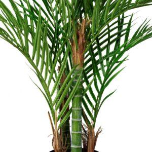 Arecapalm med naturligt utseende