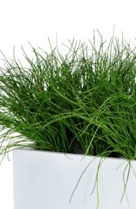 Avskärmning med gräs