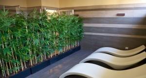Bambuavskärmning med svarta krukor i SPA miljö