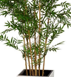 Bambu med äkta stammar