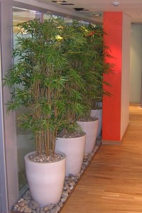 Konstgjorda bambubuskar i höga, vita krukor.