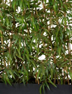 Avskärmning med bambu