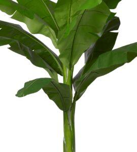 Naturtroget bananträd
