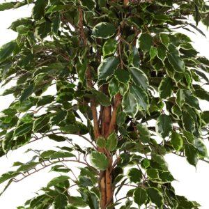 Ficus benjamin med naturligt utseende