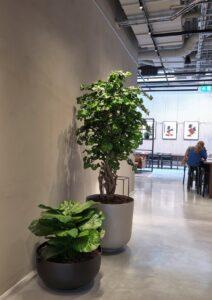 Handgjort träd med äkta stam