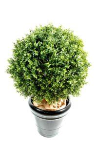 Buxbomsboll med naturligt utseende. UV behandlad växt.