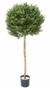 Naturtrogen buxbomsboll på äkta stam. UV behandlad växt.