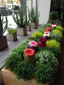 Plastväxter och fyrkantiga krukor