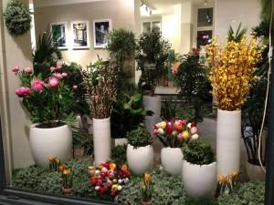 Sidenväxter i flera storlekar