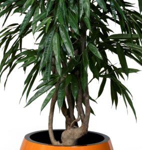 Handgjord longifolia med naturligt utseende