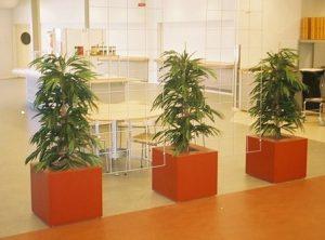 Konstväxter i fyrkantiga krukor
