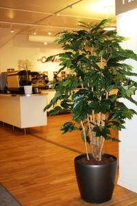 Konstgjord kaffebuske på äkta, torkade stammar.