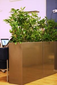 Konstväxter som avskärmning i kontorslandskap.