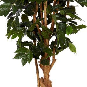 Kaffebuske med naturligt utseende