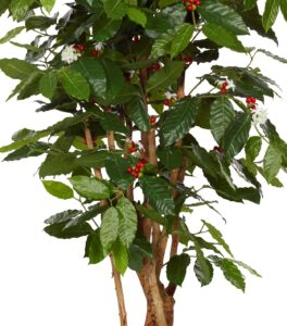 Naturtrogen kaffebuske