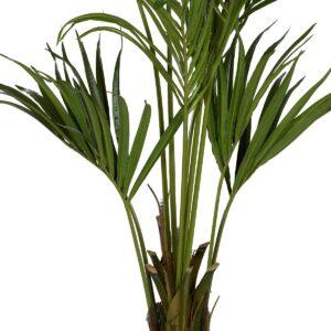Naturtrogen Kentiapalm