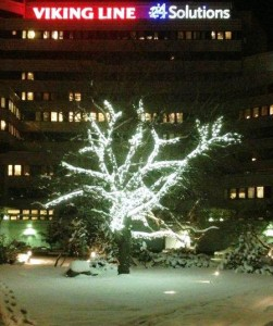 Stort träd som har försetts med vita ljusslingor