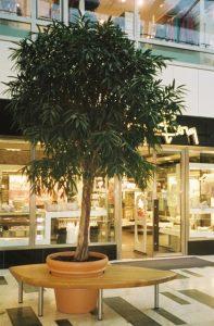 Konstväxter i specialkruka