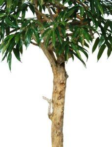Naturtrogen Longifolia