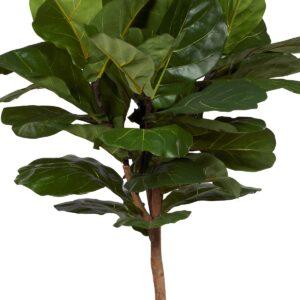 Naturtrogen Ficus Lyrata