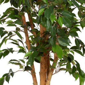 Småbladig Ficus Natasja med naturligt utseende