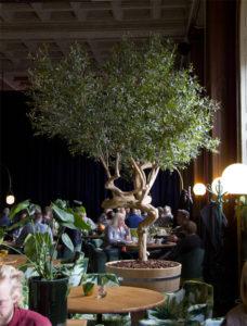Handgjort olivträd med äkta stam