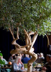Naturtroget Olivträd med äkta stammar