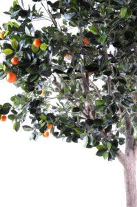 Naturtroget apelsinträd