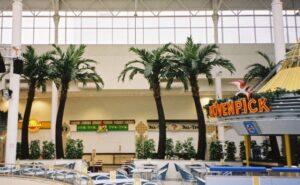 Höga palmer med naturligt utseende