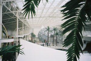 Stora konstgjorda palmer. Specialbyggda för IKEA Mega Mall, Moskva