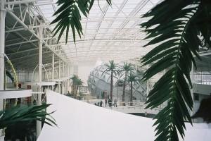 Stora konstgjorda palmer. Specialbyggda för IKEA Mega Mall, Moskva.