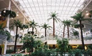 Konstgjorda palmer upp till 14 meter höga. Specialbyggda för IKEA Mega Mall, Moskva.