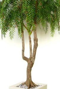Naturtroget root träd