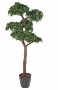 Poducarpus med naturligt utseende. UV behandlad växt.