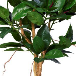 Naturtrogen Ficus Robusta