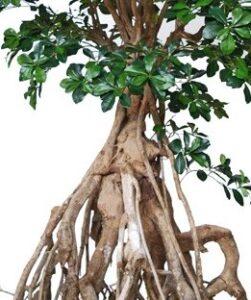 Naturtroget träd med äkta stammar