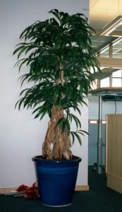 Handgjord konstväxt på äkta, torkad stam.