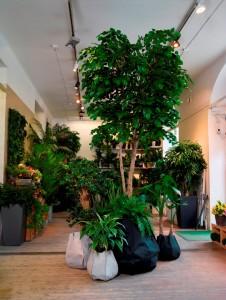 Konstväxter i Wexters butik