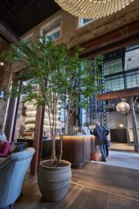 Konstgjort Bucida träd med naturligt utseende