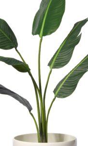 Naturtrogen palm