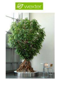 Broschyr växter med prislista