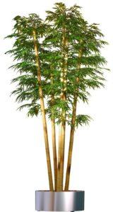 Naturtrogen bambu med äkta stammar