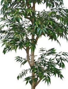 Träd med äkta stammar