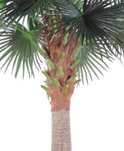 Camerus palm med naturligt utseende