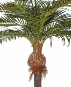 Naturtrogen cocospalm