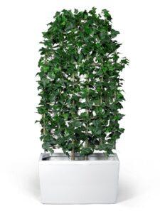 Avskärmning med konstgjord murgröna